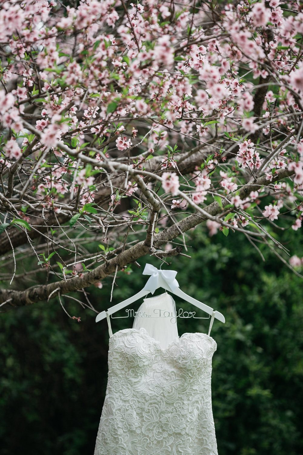 brides dress on her wedding day hanging in a cherry blossom tree